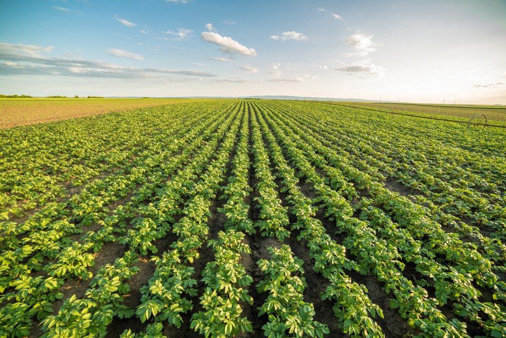 Green field in a row